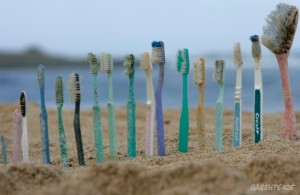 20061026 HONOLULU, HAWAI : UNITED STATES OF AMERICA Toothbrushes are lined up on Kahuku beach, Honolulu, Hawaii, 26th October 2006. Greenpeace are highlighting the threat that plastic poses to the world's oceans. GREENPEACE / ALEX HOFFORD source : http://www.greenpeace.org/international/en/news/features/trashing-our-oceans/